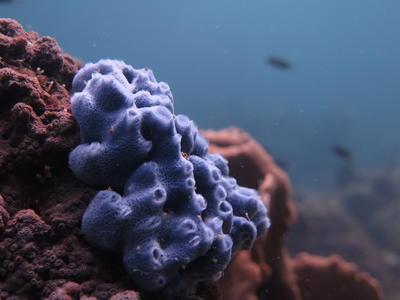 Im Belize Barrier Reef kannst du dich mit Freiwilligenarbeit für den Naturschutz einsetzen