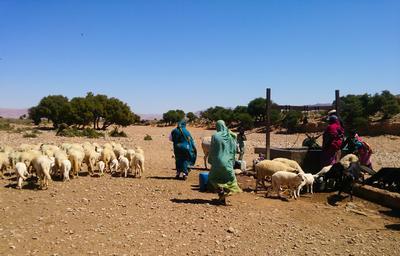 Eine marokkanische Gastfamilie mit Herde