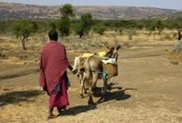 Ein Massai im Massaidorf Endulen mitten im Ngorongoro - Nationalpark, wo unser Community - Projekt stattfindet.