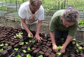 In der Baumschule topfen unsere Freiwilligen Setzlinge für das Aufforstungsprogramm mit einheimischen Baumarten um.