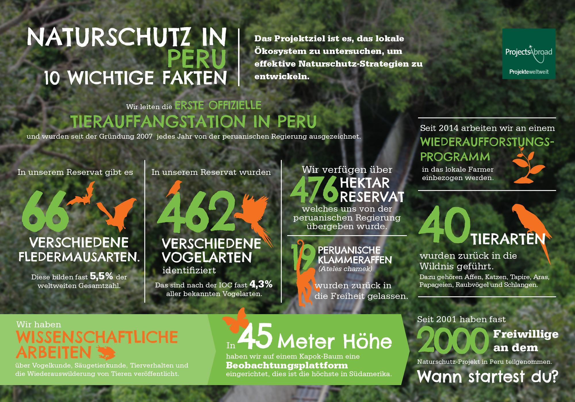 2017 Mahagonibaum Im Regenwald