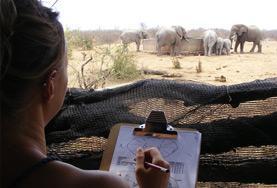 Freiwillige führen einer Beobachtungsstudie mit einer Elefantenherde im Wild at Tuli - Reservat durch.