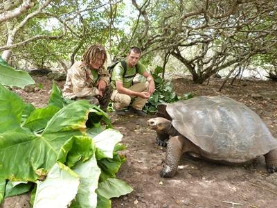 Freiwillige füttern eine Galapagos - Schildkröte im Naturschutz – Projekt in Ecuador