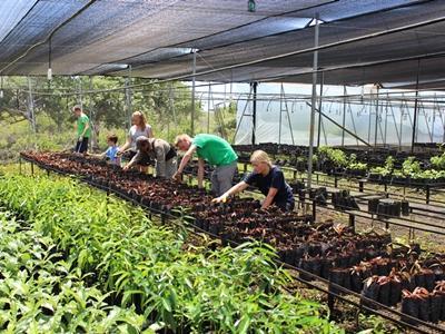 Freiwillige pflanzen Setzlinge in der Highlands – Pflanzenzucht im Naturschutz - Projekt in Ecuador