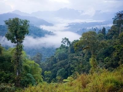 Der Regenwald in Ecuador Nationalpark, in dem das Naturschutz – Projekt von Projects Abroad stattfindet