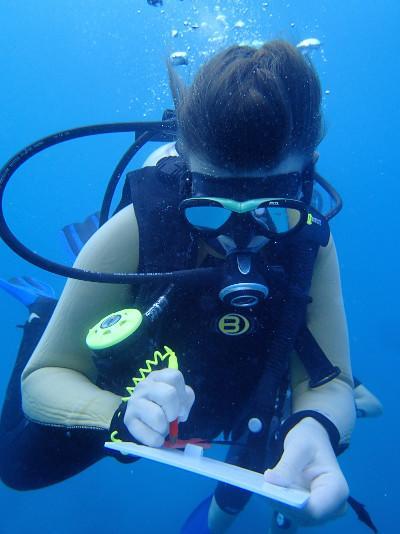 Ein Freiwilliger dokumentiert verschiedene Haiarten auf den Fidschi - Inseln