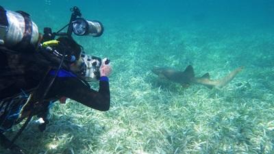 Freiwillgenarbeit Naturschutz in der Karibik: Belize