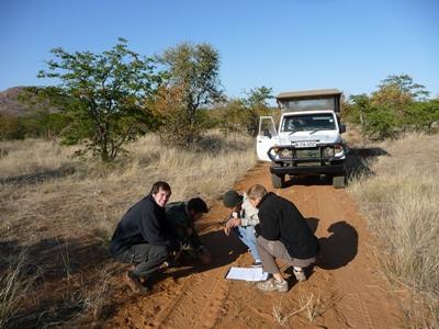 Freiwillige im Naturschutz – Projekt in Botswana suchen Fährten an einer Straße im Tuli Wildreservat