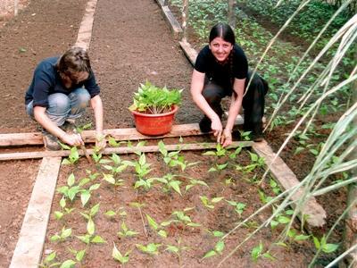 Zwei Freiwillige bei der Arbeit in der Mahagoni – Baumschule im Naturschutz – Projekt in Peru