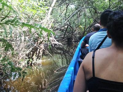 Freiwillige fahren auf einem Boot durch den Magrovenwald in Mexiko mit Projects Abraod