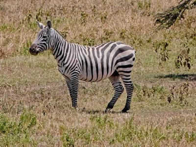 Tierschutz in Kenia