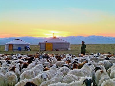 Nomaden - Projekt in der Mongolei