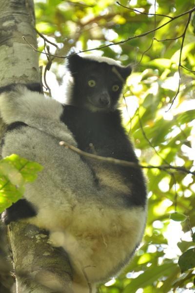 Leiste in deinen Ferien Freiwilligenarbeit im Naturschutz - Projekt in Madagaskar!
