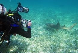 Ein Freiwilliger dokumentiert während eines Tauchgangs im Schulferien - Special Naturschutz in Belize den Zustand einer Seegraswiese.