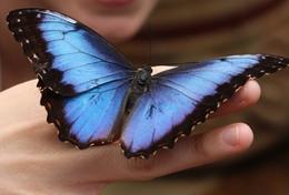 Projekte in Mittelamerika - Costa Rica : Schulferien - Specials - Naturschutz