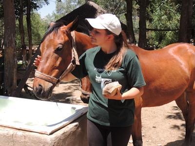 Projects Abroad Freiwillige assistiert bei der Pflege eines Therapie-Pferdes in Bolivien.