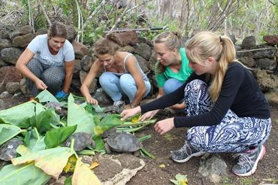 Eine Gruppe junger Freiwilliger füttert die vom Aussterben bedrohten Schildkröten in Ecuardor.