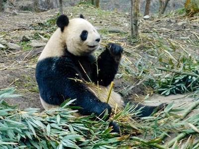 Sozialarbeit & Tierschutz in China