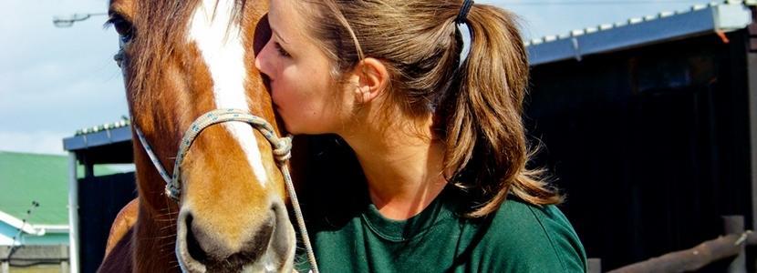 Tiermedizin & Tierpflege