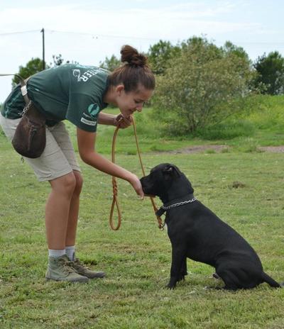 Sammle Erfahrung in der Tierpflege und –Erziehung in unserem Tierpflege – Praktikum für Schüler/innen in Argentinien