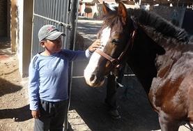 Ein Junge in unserem Pferdetherapie - Projekt begrüßt sein Therapiepferd, zu dem er bereits eine enge Bindung aufgebaut hat.