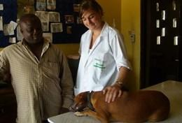 Eine Tiermedizin - Praktikantin stellt in einer Tierklinik zusammen mit dem leitenden Veterinärmediziner eine Diagnose für einen Hund.