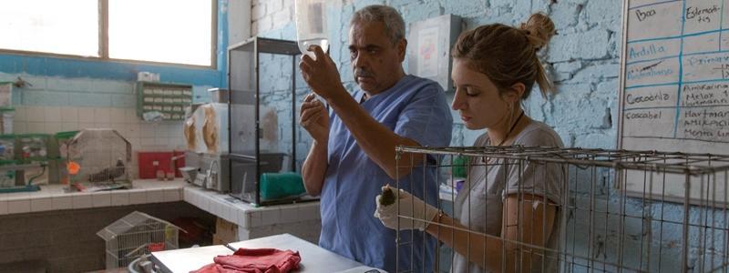 Praktikum Tiermedizin im Ausland