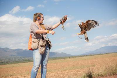 Freiwillige trainiert einen Falken im Projekt in Mexiko