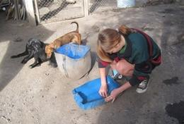 Projekt in der Karibik - Jamaika : Tierpflege