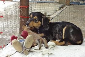 Freiwilligenarbeit im Ausland - Samoa : Tierpflege & Tiermedizin