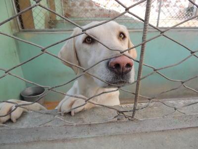 Pflege die Tiere gesund und kümmere dich um sie