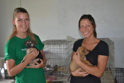 Engagiere dich freiwillig in der Tierpflege auf Jamaika