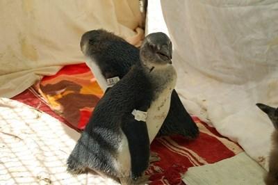 Tierpflege in Südafrika