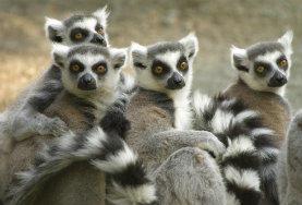 Projekte in Afrika - Madagaskar : Winter - Specials