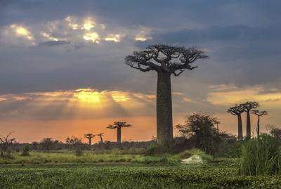 Hilf im Naturschutz im Winter-Special in Madagaskar!