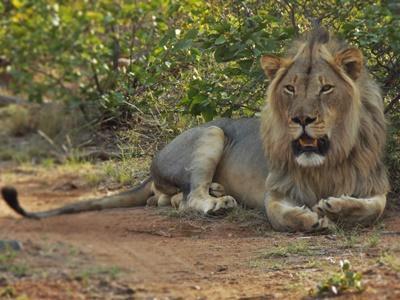 Naturschutz - Projekt in Südafrika
