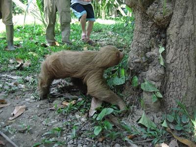 Naturschutz - Projekt in Peru