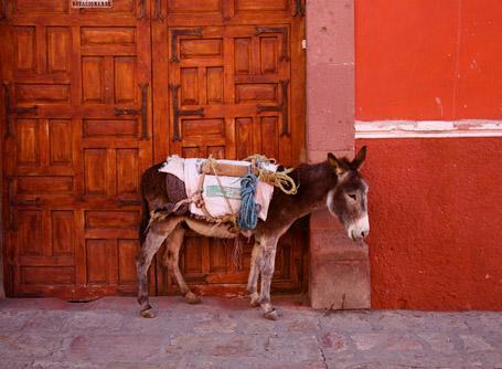 Freiwilligendienste und Auslandspraktika Mexiko
