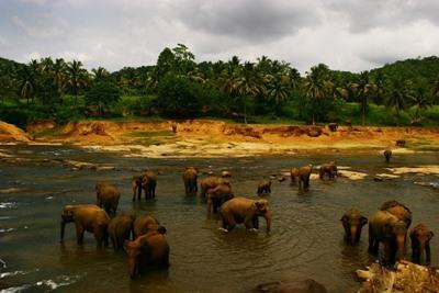 Freiwilligenarbeit in Sri Lanka