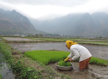 Freiwilligendienste und Auslandspraktika Vietnamt